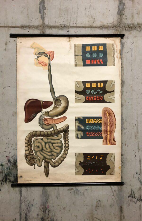 vintage, schoolplaat, woonaccessoires, stoer, interieur