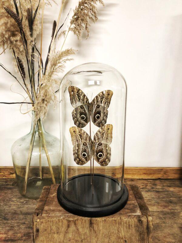 vlinderstolp, uilenoog, stolp, woonaccessoires, interieur