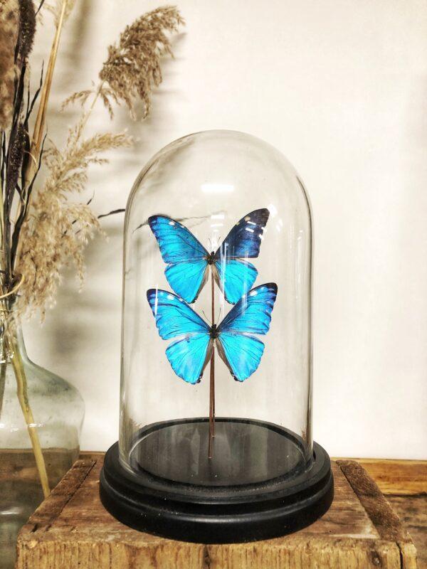 vlinderstolp, naturalia, vlinders, insecten, verzamelen, woonaccessoires