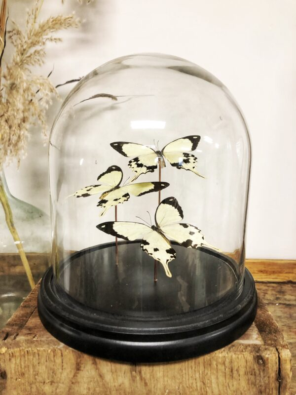stolp, vlinders, insecten, naturalia, woonaccessoires, interieur