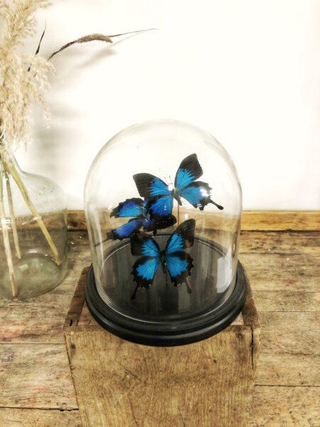 stolp, glas, vlinders, insecten, woonaccessoires, interieur